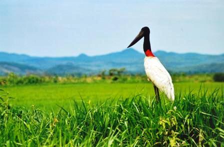Trek_Package 4064 - Pantanal Sul - Região Miranda